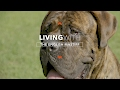 ALL ABOUT LIVING WITH ENGLISH MASTIFFS