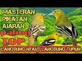 Suara Burung Cipoh Pikat Suara Burung Sirtu Suara Burung Sirtu Suara Burung Cipeuw Ributt  Mp3 - Mp4 Download