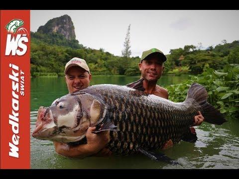 Ogromne ryby – karp syjamski 72 kg i sum z Mekongu 55 kg złowione przez Polaka!