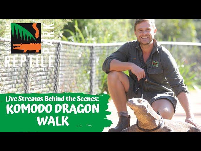 KOMODO DRAGON WALK (LIVE FOOTAGE) | AUSTRALIAN REPTILE PARK