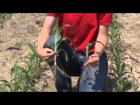 Corn College TV: Season2 - Ep3