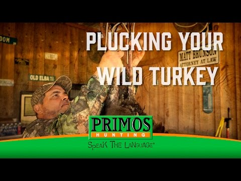 How to Pluck a Wild Turkey