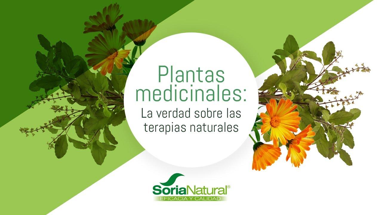 Plantas medicinales: la verdad sobre las terapias naturales