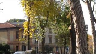 Foglie Cadenti a Roma , inizi di Dicembre 2011
