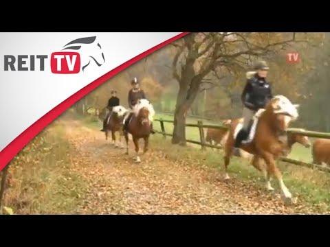 Bild: Vorstellung der verschiedenen Pferderassen