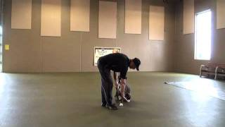 Clubber (boxer) Boot Camp Dog Training Video
