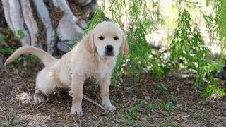 Training Your Puppy – Eliminating Biting Behaviors