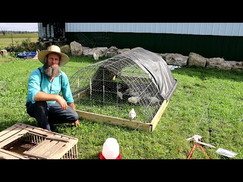 CHICKEN COOP FOR $50 AND 1 HOUR TO BUILD