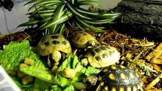 Tortoise Supply Video Entry