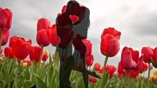 Женская Весна   Л Соколова