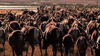 Дети тундры (91) - фрагмент фильма