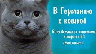 С кошкой в Германию.Вывоз животных в страны ЕС