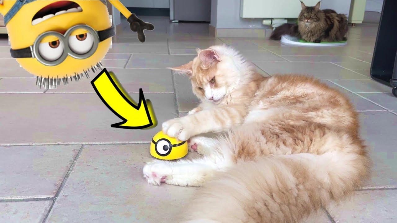Funny Cats VS Minion Robot Prank