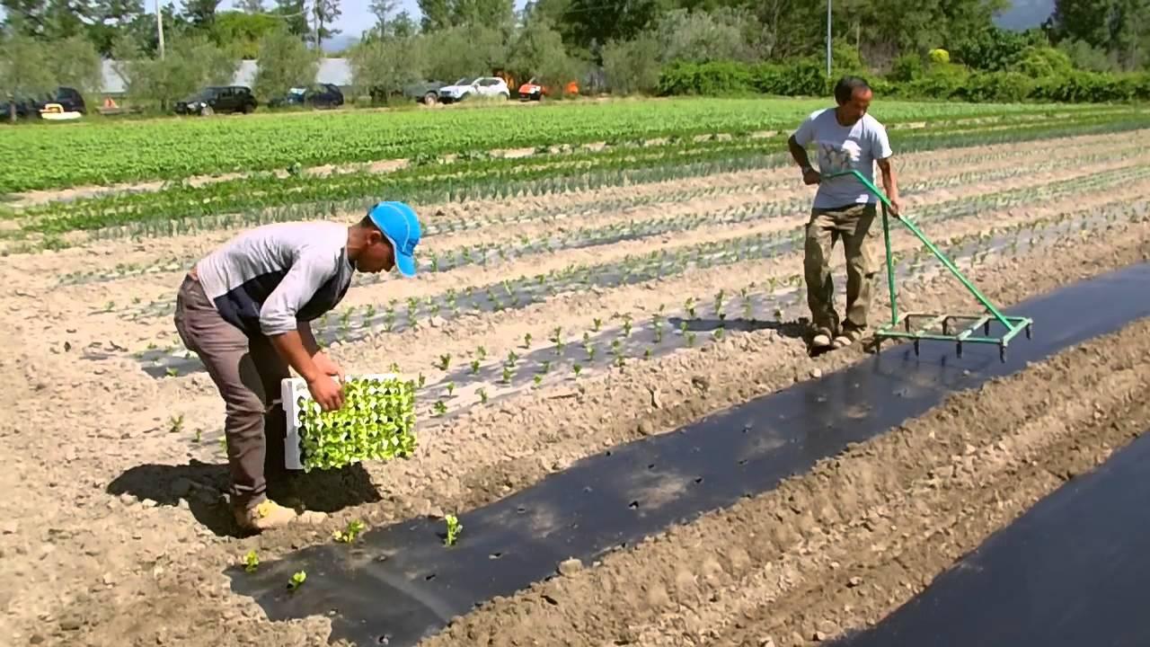 Pacciamatura bio youtube for Girandole per irrigazione