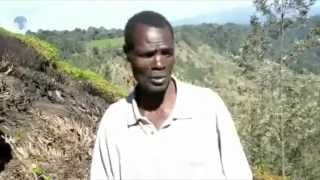 Farmers in tharaka Nithi count loses after fire destroyed their farms