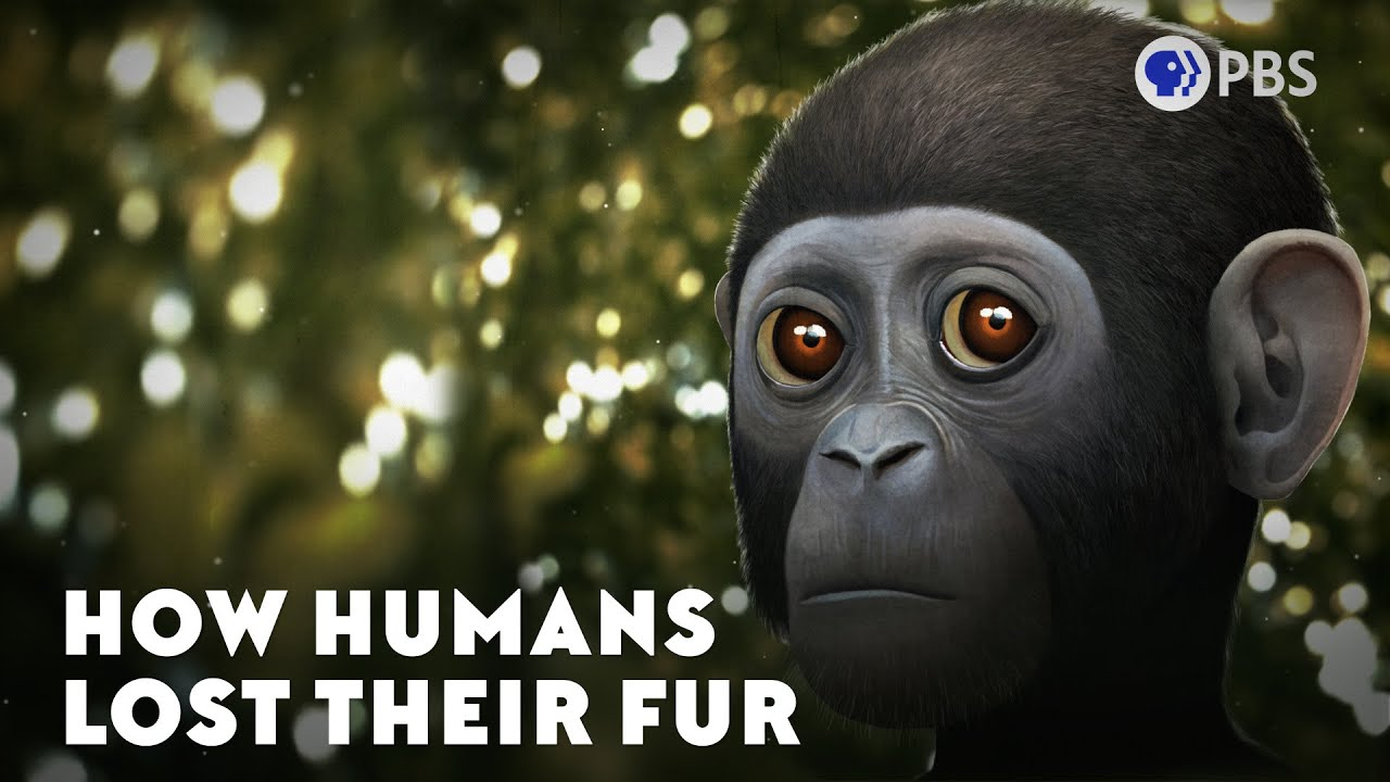 How Humans Lost Their Fur