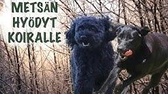 Mitä hyötyä koiralle on metsästä ⎪Trust me I am a DOGtor
