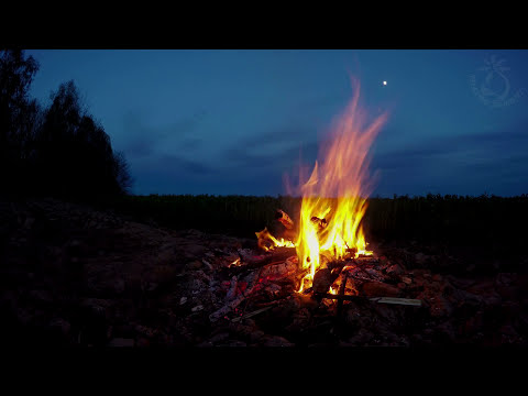 🎧 Campfire Night Sounds In The Great Outdoors With Owls & Cicadas Ambiance For Sleep And Relaxation