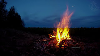 🎧 Campfire Night Sounds In The Great Outdoors With Owls & Crickets Ambiance For Sleep And Relaxation thumbnail