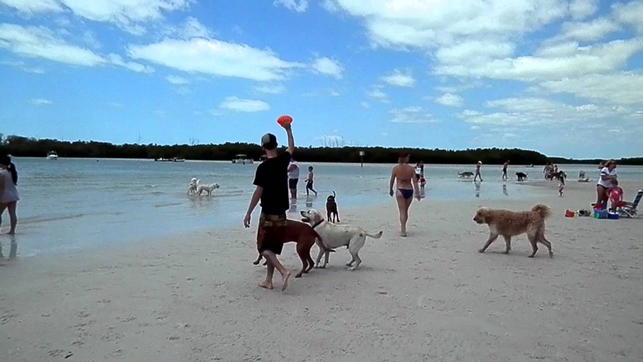 Fort Myers Dog Beach You