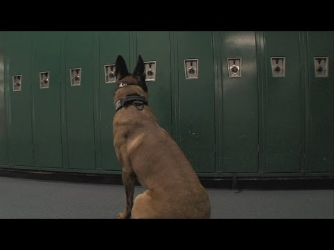 Drug dogs pay a visit to one Wabash Valley school as a routine search