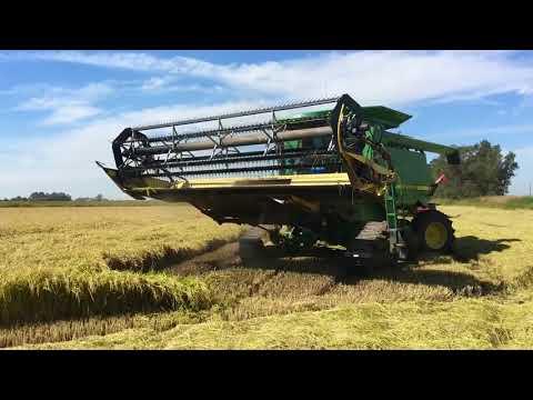 Производство плит OSB из рисовой соломы в Краснодарском крае