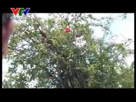 Ky Uc Mien Tay - Hang rao dam but[vtv can tho].flv