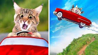 CATS CAR RACE