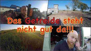 FarmVLOG#119 - Das Getreide steht nicht gut da!!!