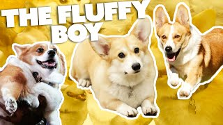 The Best of Cheddar | Brooklyn Nine-Nine | Comedy Bites