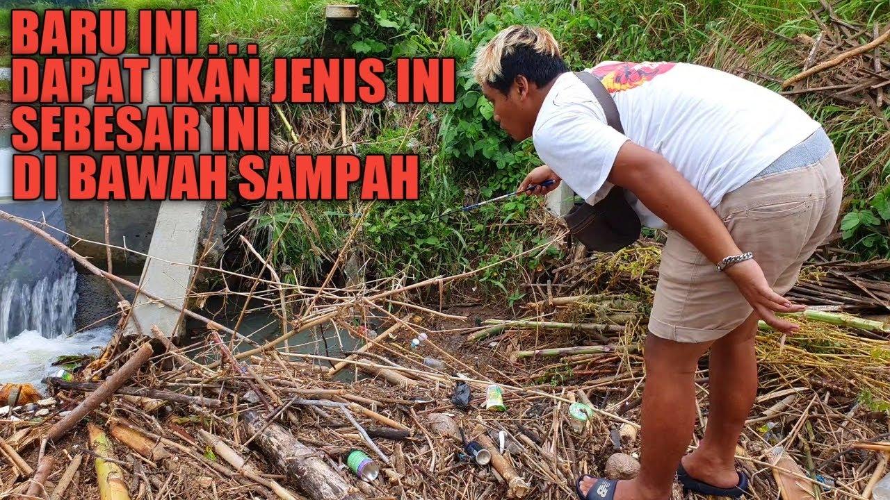 Ikan Besar Melimpah Di Balik Tumpukan Sampah