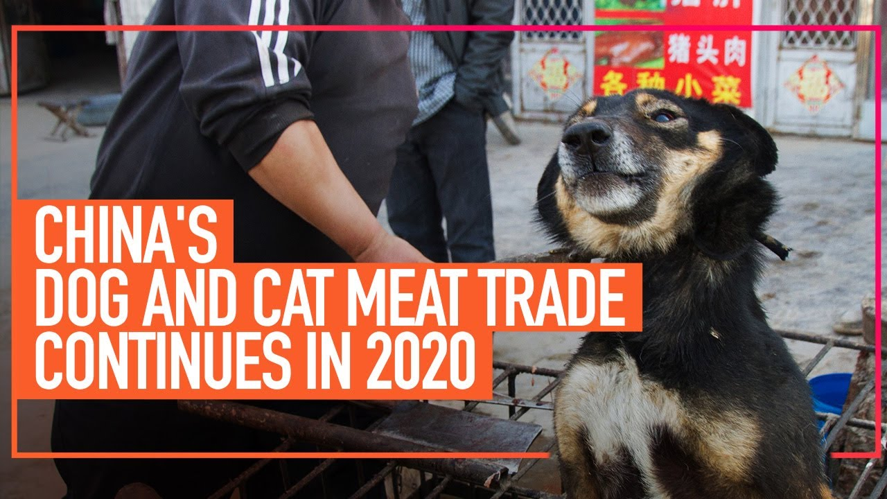China's Dog and Cat Meat Trade Continues in 2020