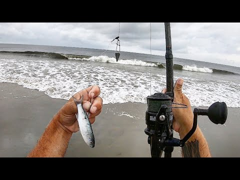 Surf Fishing With LIVE MULLET (Cook & Catch)