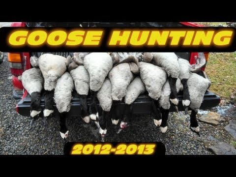 Goose Hunting 2012 - 2013 Pennsylvania