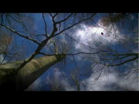 Ryan Adams - Blue Sky Blues