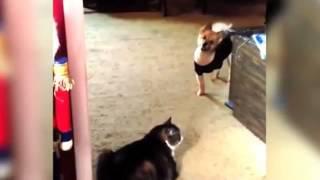 Кошки & собаки