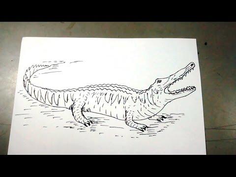 Cómo dibujar un cocodrilo paso a paso - YouTube