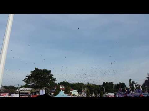 penampakan kelelawar #soppengtolaknarkoba #ayokesoppeng