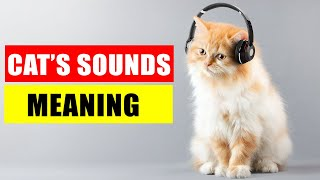 8 Sounds Cats Make and Their Meanings - Understand Your Cat Better