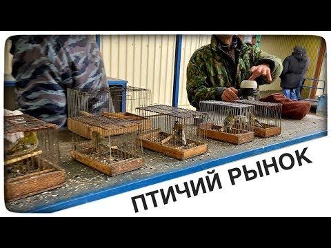 Щеглы. Птичий рынок Садовод. Москва