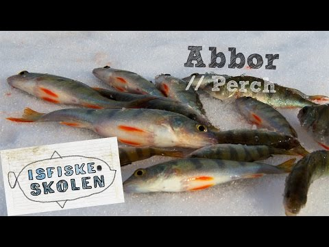 Fiske abbor på isen 1 // How to icefish perch 1 - Isfiskeskolen Ep3