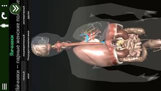 Скачать Внутренние органы в 3D анатомия RU