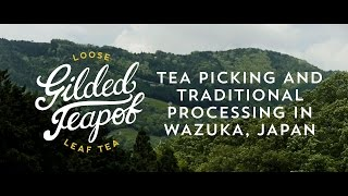 Tea Picking in Wazuka, Japan