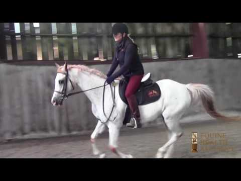 POA/Arabian 14.1 Pony - Lease/Sale - Located in New Hampshire
