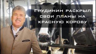 Грудинин показал ферму и рассказал о своих планах на красную корову