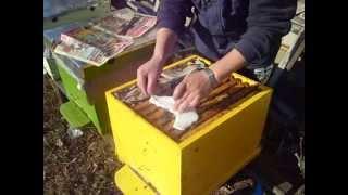 Repeat youtube video Nr.1- Hranire cu apifonda/ian.2012
