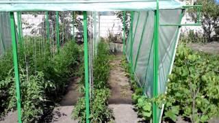 Помидоры.Как правильно выращивать помидоры у себя на огороде(Выращивание помидор в теплице. Насколько лучше помидоры себя чувствуют в теплице, точнее под плёнкой. Как..., 2015-06-27T10:04:16.000Z)