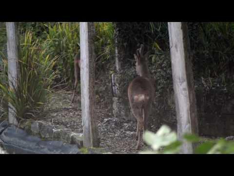 Deer, Deer