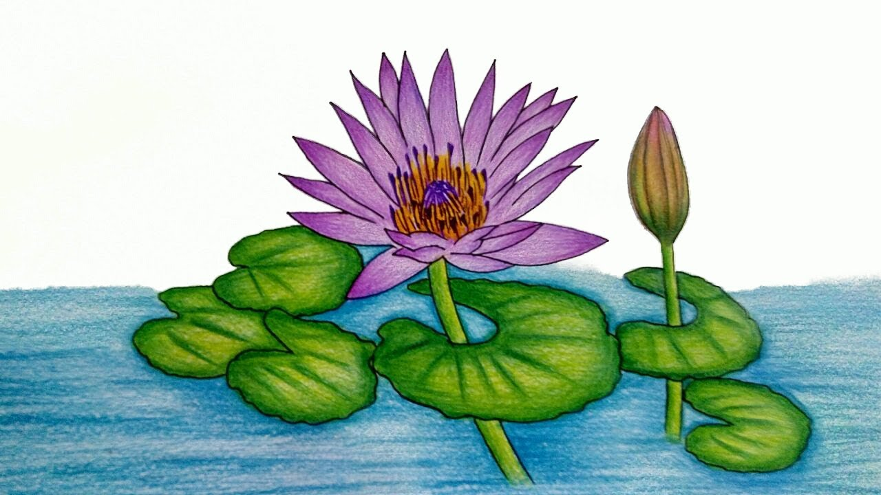 How to draw water lily step by step very easy water lily how to draw water lily step by step very easy water lily drawing izmirmasajfo Gallery