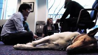 A Service Dog Day Afternoon
